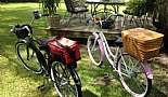 2012 Schwinn Del Mar and 2011 Schwinn Sanctuary with custom mounted hand made baskets.